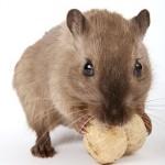 酵素を効果的に摂るには 〜すりつぶして食べることの大切さ〜